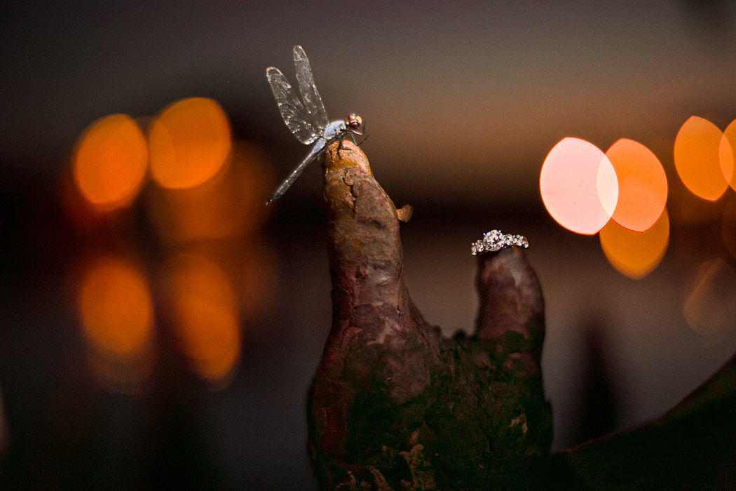Wedding Ring and Dragon fly sits on Cypress Knees in unusual wedding photograph