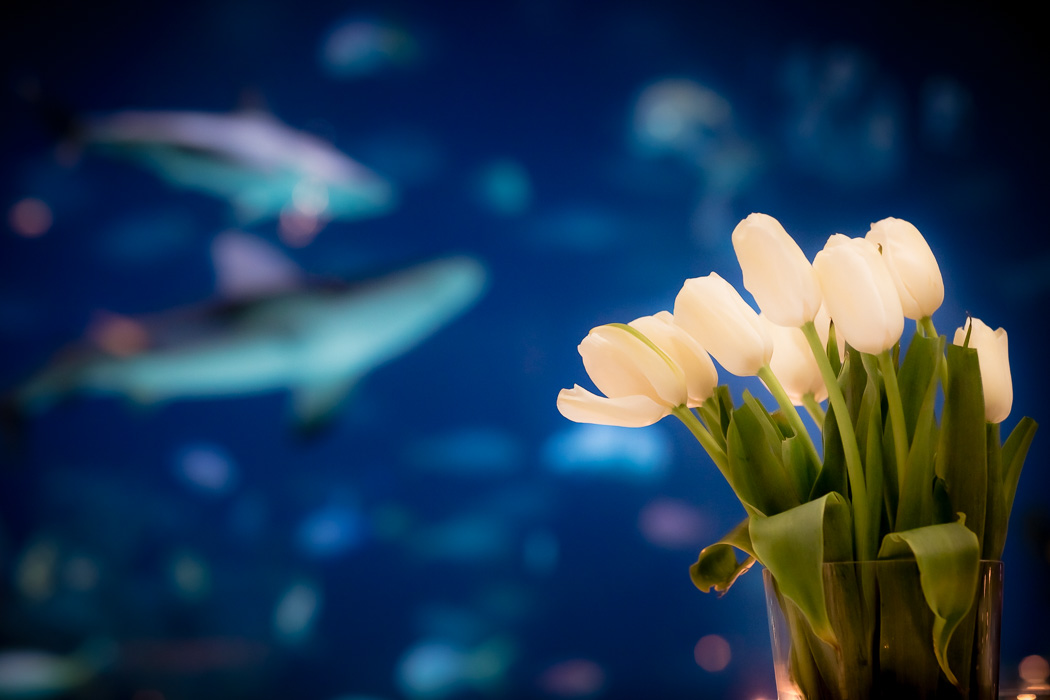 Sharks swim behind tulip centerpieces at Greensboro, NC wedding